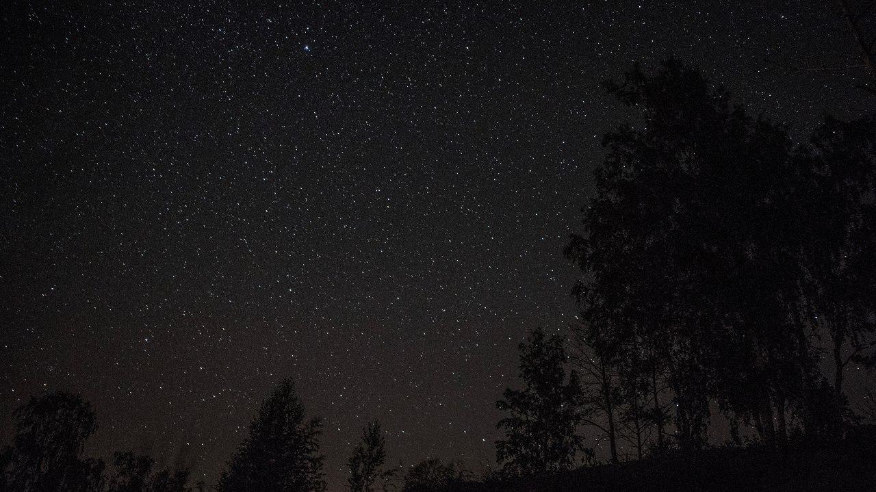 черные деревья на фоне звезд